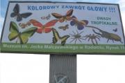 billboard MALCZEWSKI motyle